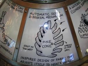 Pine_cone_1